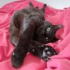 Panthère noire / Black panther 2