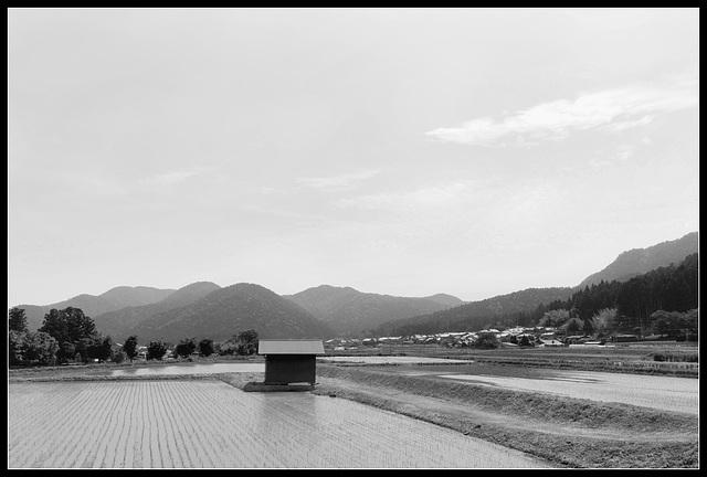 La cabane au milieu de la rizière