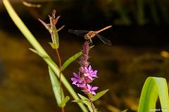 Libellenbesuch
