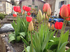 Le printemps est là ...Enfin !