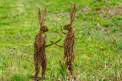 March Hares!
