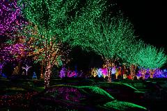 Christmas Lights at the Mormon Temple