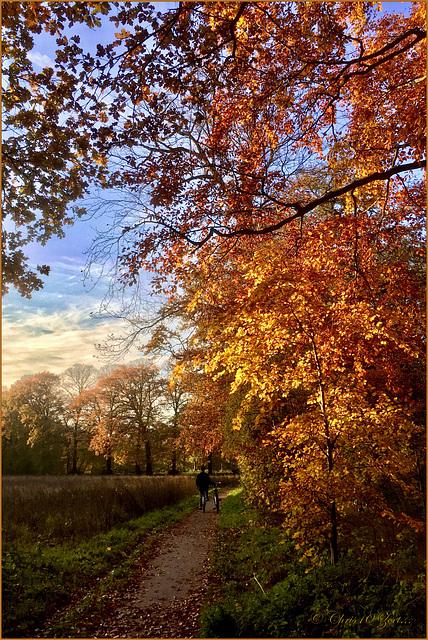 Golden Autumn Colours...