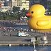 Duck-w728