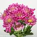 Flowers Impressionistic