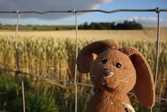 Happy wheaty Fence Friday