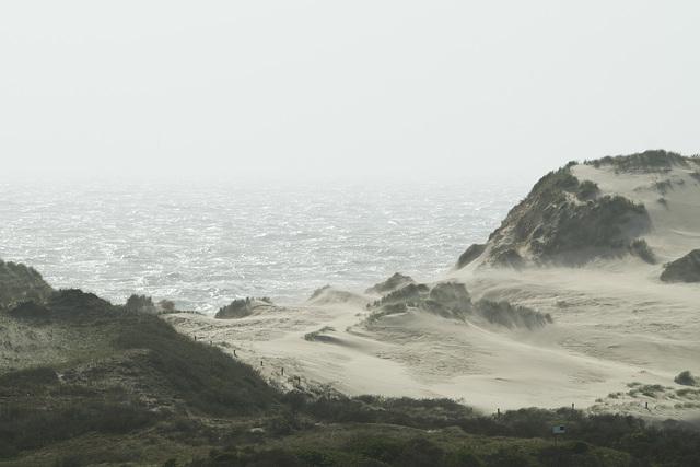 Nordholländisches Dünenreservat DSC09503