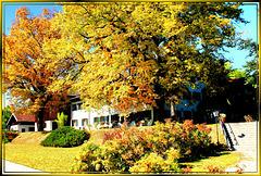 Herbstlaub an der alten Linde. ©UdoSm