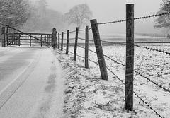 snowing (2)