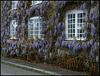wisterious windows