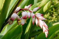 Plante inconnue de Madagascar !!!