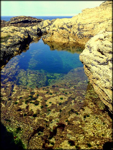 Rock pool, Greenbank Cove
