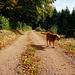 Balade d'automne / Autumn walk