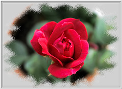 Rose behind glass...  ©UdoSm