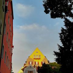 yellow ark