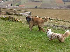 ballade canine