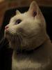 chat Philémon