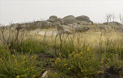 Parque Nacional da Peneda-Gerês, Penedos