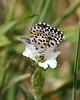 Vom Aussterben bedroht - Threatened by extinction - 2 PiPs