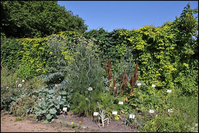 Jardin botanique de La Charme -63 (18)