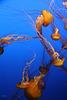 Aquarius - Monterey