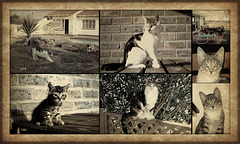 Our Cats over the years