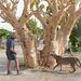 Namibia, Invitation to Climb the Tree