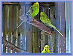 School Aviary