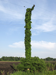 Rural utility pole.