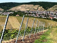 Blick aus den Bachemer Weinbergen auf Ahrweiler
