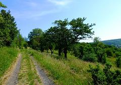 DE - Sinzig - Auf dem Weg nach Bad Bodendorf