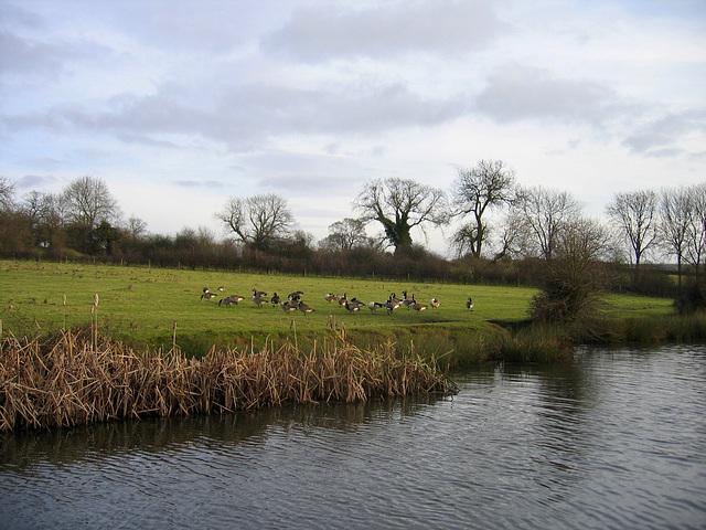 Rushall Canal looking towards Riddian Bridge from Park Lime Pits Country Park