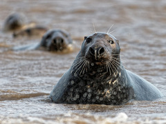 Seals -Explored-
