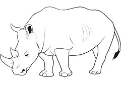 rinocero