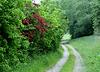 Wanderweg  (PiP)