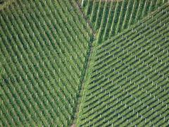 Geometrie der Weinberge