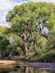 The San Pedro River