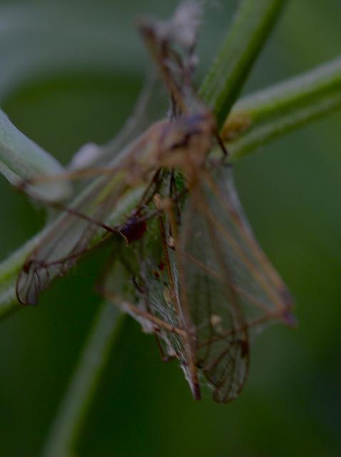 prisonnière de l'araignée
