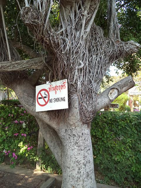 Arbre non fumeur / Non smoking tree