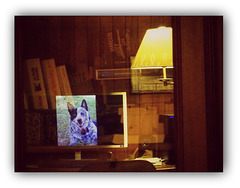 For PAM: Flicka in reflection in my bookcase