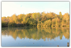l'automne dans l'étang
