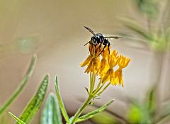 7019932 DxOdL · Bee