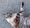 Gros chaton sur ton / Camouflage!!!!