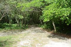 Dominican Republic, The Road in the Jungle of Eastern Haiti