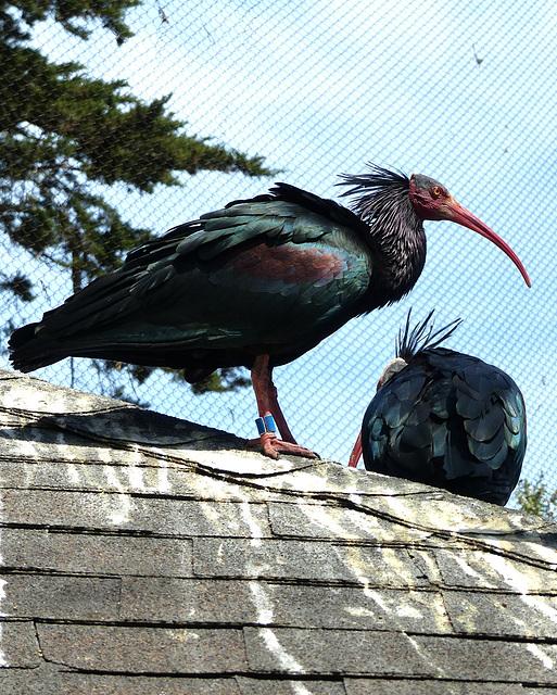 San Francisco Zoo (13) - 19 April 2016