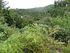 Hillside bush