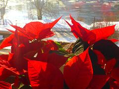 Farbe im Winter - koloro en vintro