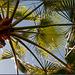 Unterm Palmenwedel