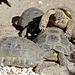 Fleißige Schildkröten (Wilhelma)