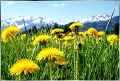 Frühling im Allgäu... ©UdoSm